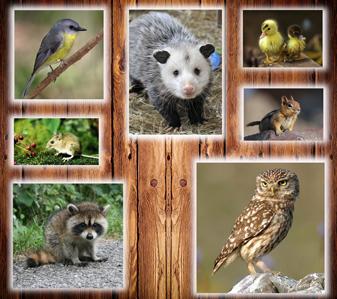 Ventura County Animal Shelter -- Job Opening | Citizens ... |Ventura County Animal Services